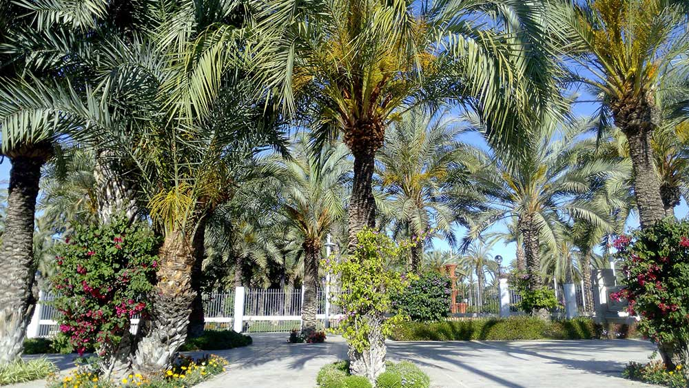 What to see in Elche with your rental car