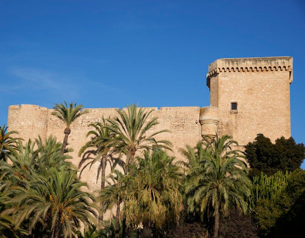 El Palmera histórico de Elche, uno de los tres patrimonios de la humanidad