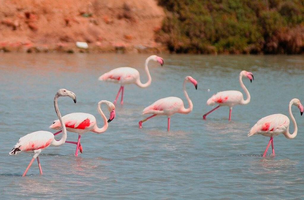 Avistamiento de aves en el parque natural de El Hondo