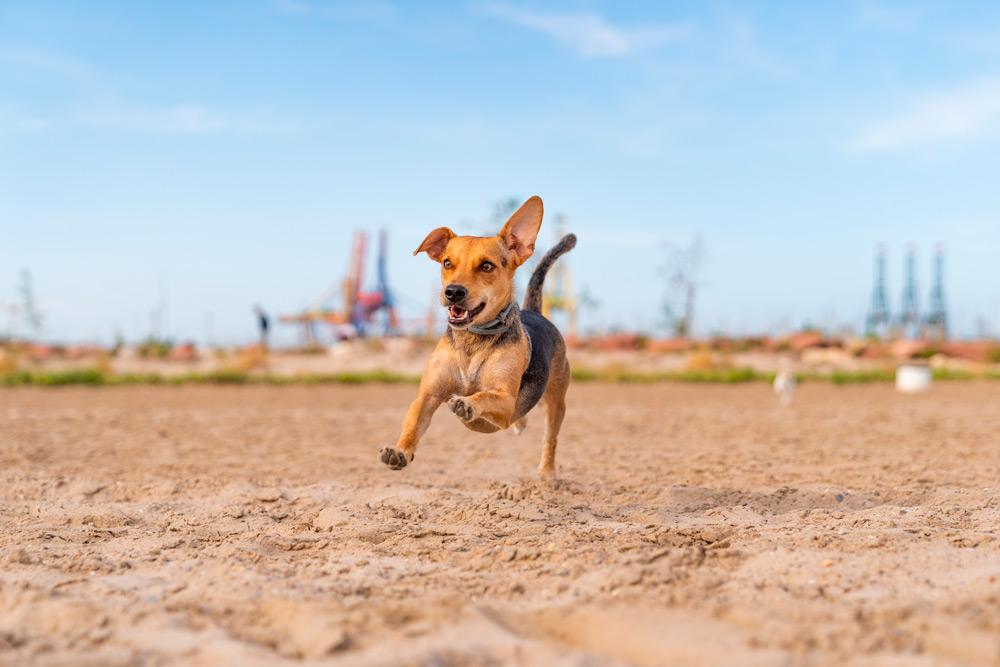 Alquila tu coche en Lara Cars y conoce las playas para perros de la Costa Blanca