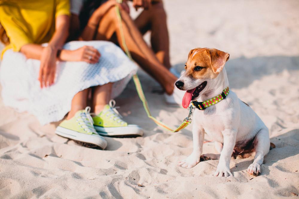 Visita estas 7 playas para perros de la Costa Blanca con tu coche de alquiler