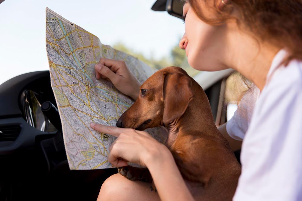 Visita Torrevieja con tu perro en un coche de alquiler