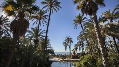 Visita el parque el palmeral de Alicante