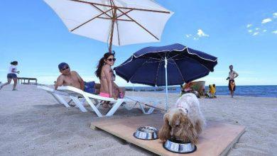 Playa de Agua Amarga para perros en Alicante
