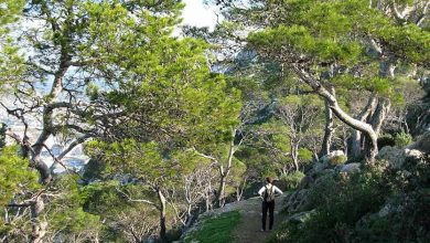 Rutas para disfrutar de la naturaleza en Calpe